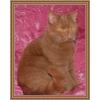 Британские яркие шоколадные котята  и редчайший ЦИННАМОН!