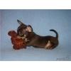 Миниатюрные  щеночки чихуахуа