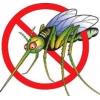 Избавиться от комаров,  уничтожение комаров в Волгограде